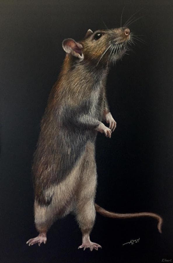 Крысиный принц