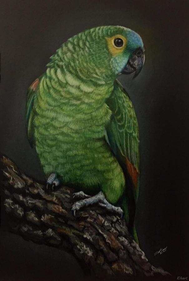 Боливийский красавец