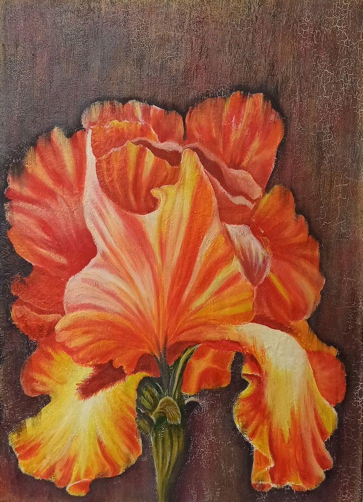 Оранжевый ирис