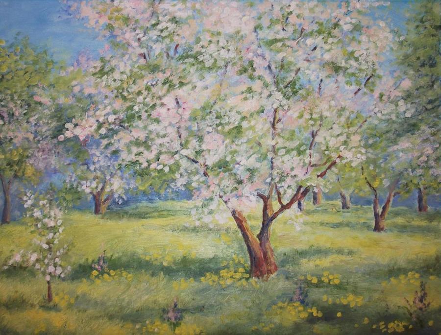 Яблони цветут
